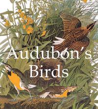 Обложка «Audubon's Birds»