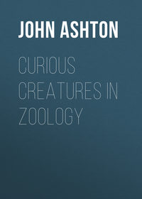 Обложка «Curious Creatures in Zoology»