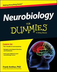 Обложка «Neurobiology For Dummies»