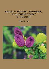 Обложка «Виды и формы хвойных, культивируемые в России. Часть 2. Picea A. Dietr., Thuja L.»