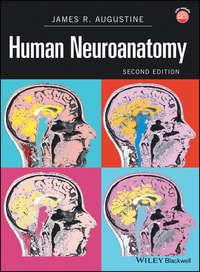 Обложка «Human Neuroanatomy»