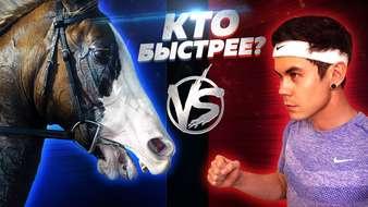 Кто быстрей человек или лошадь?