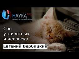 Сон животных и человека