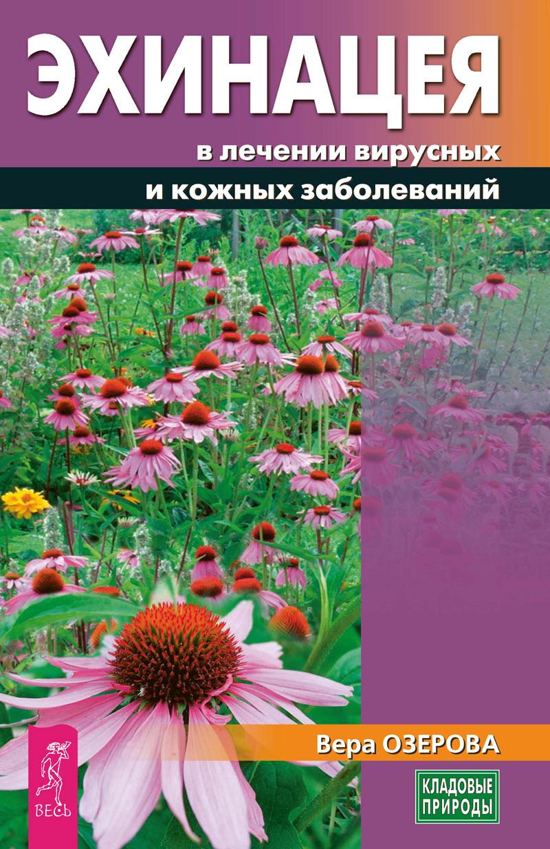 ekhinatseya v lechenii virusnykh i kozhnykh zabolevaniy