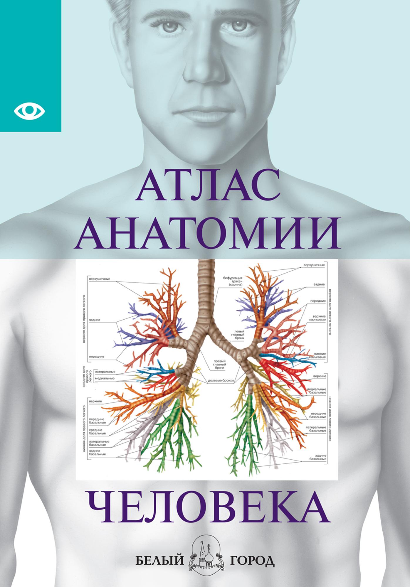 Отсутствует Атлас анатомии человека. Все органы человеческого тела винсент перез большой атлас анатомии человека