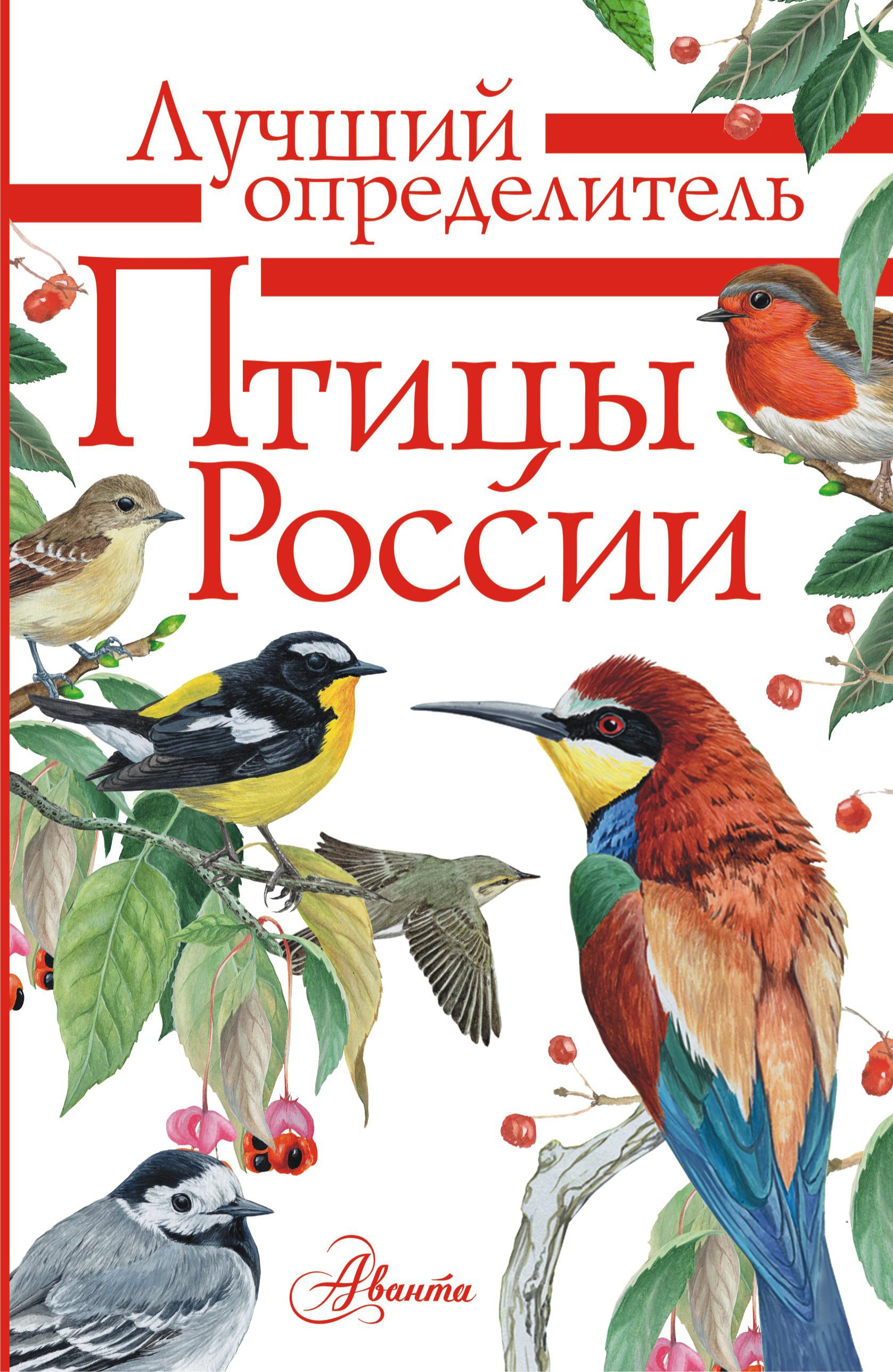 справочник в картинках птицы долго