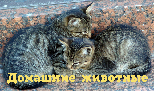 Елена Донцова Как давать лекарства кошкам и собакам? лекарства щитовидна жлеза