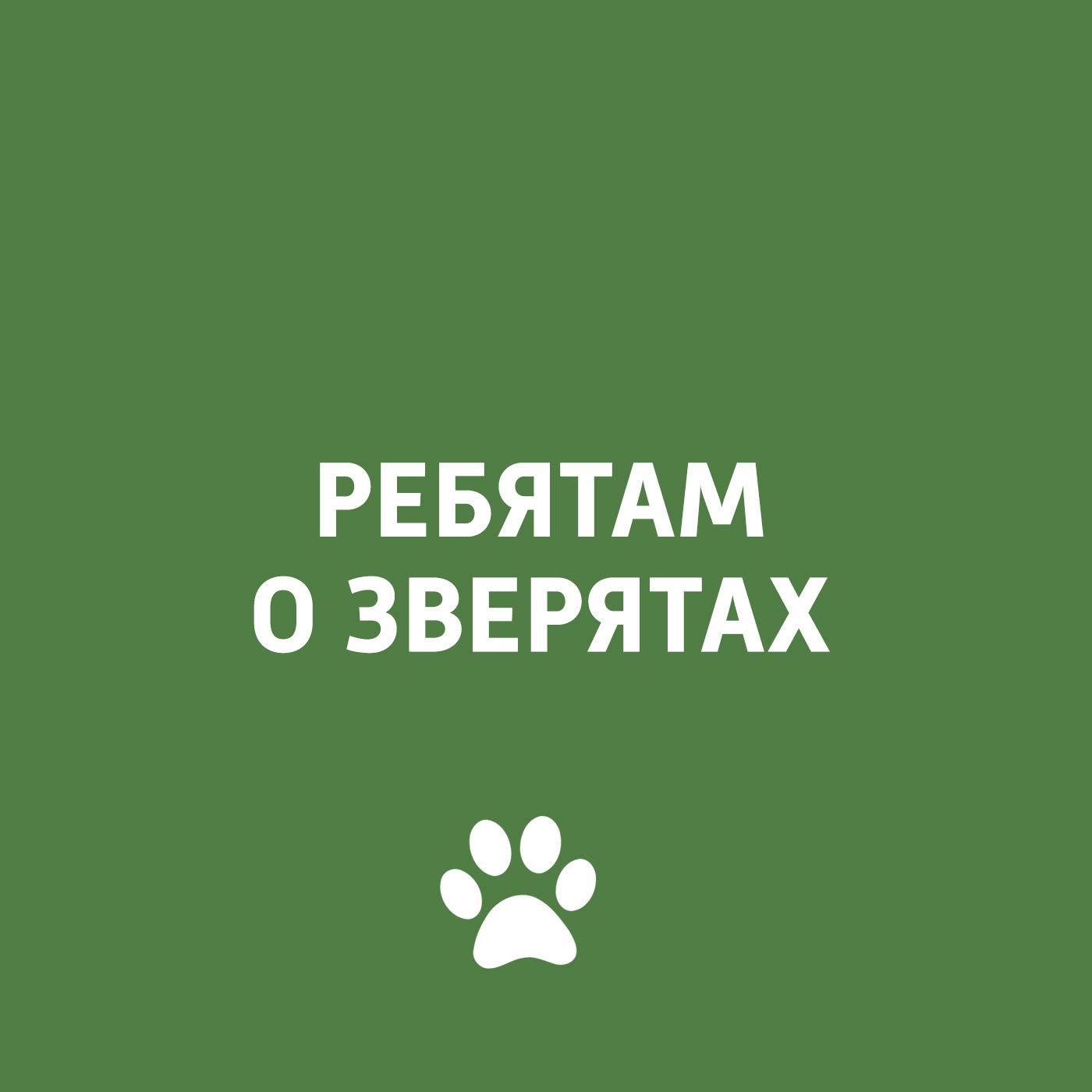Творческий коллектив программы «Пора домой» Экзотические животные в домашних условиях