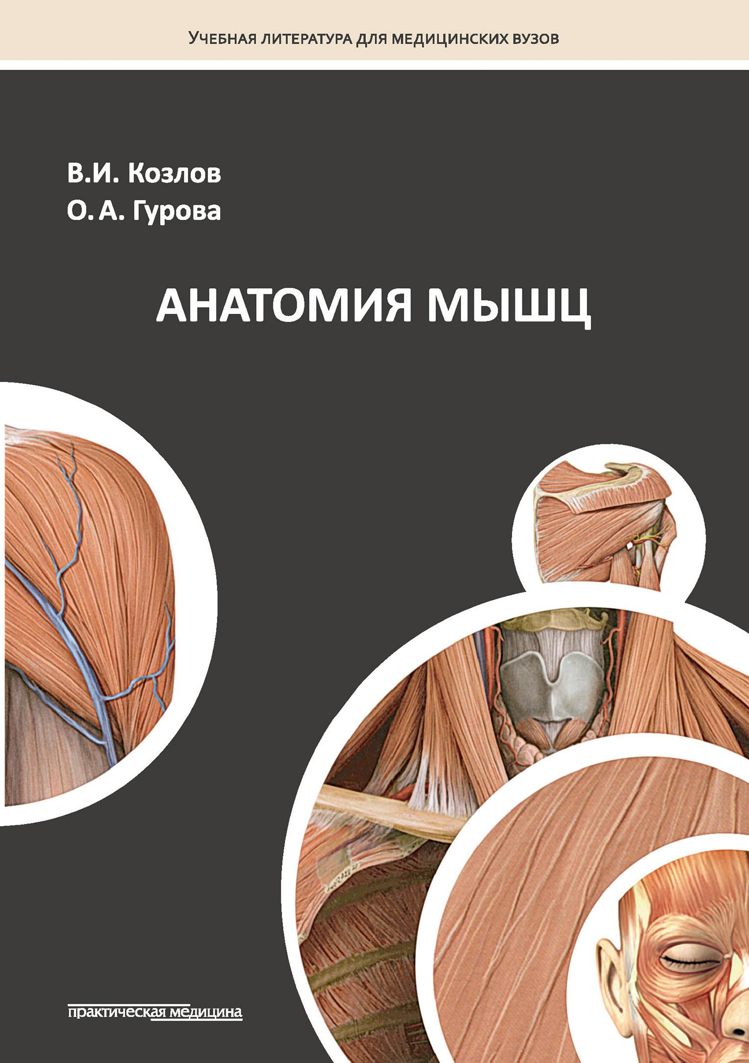 Ольга Гурова Анатомия мышц