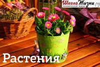 Обложка «Что мы знаем о растениях - знаках цветочного гороскопа? Омела.»