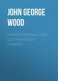 Обложка «Hardy Perennials and Old Fashioned Flowers»