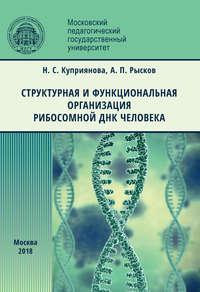 Обложка «Структурная и функциональная организация рибосомной ДНК человека»