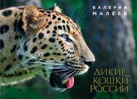 Обложка «Дикие кошки России»