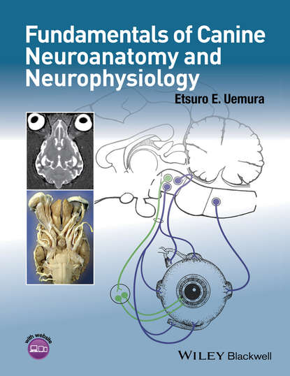 Etsuro Uemura E. Fundamentals of Canine Neuroanatomy and Neurophysiology barker roger a neuroanatomy and neuroscience at a glance