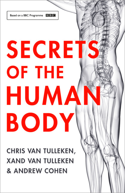 Andrew Cohen Secrets of the Human Body human body