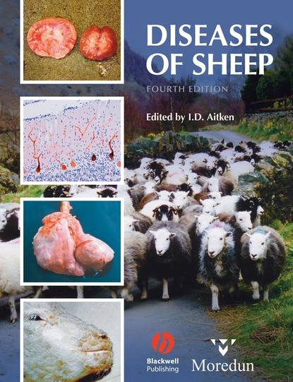 Группа авторов Diseases of Sheep the american cattle doctor a complete work on all the diseases of cattle sheep and swine