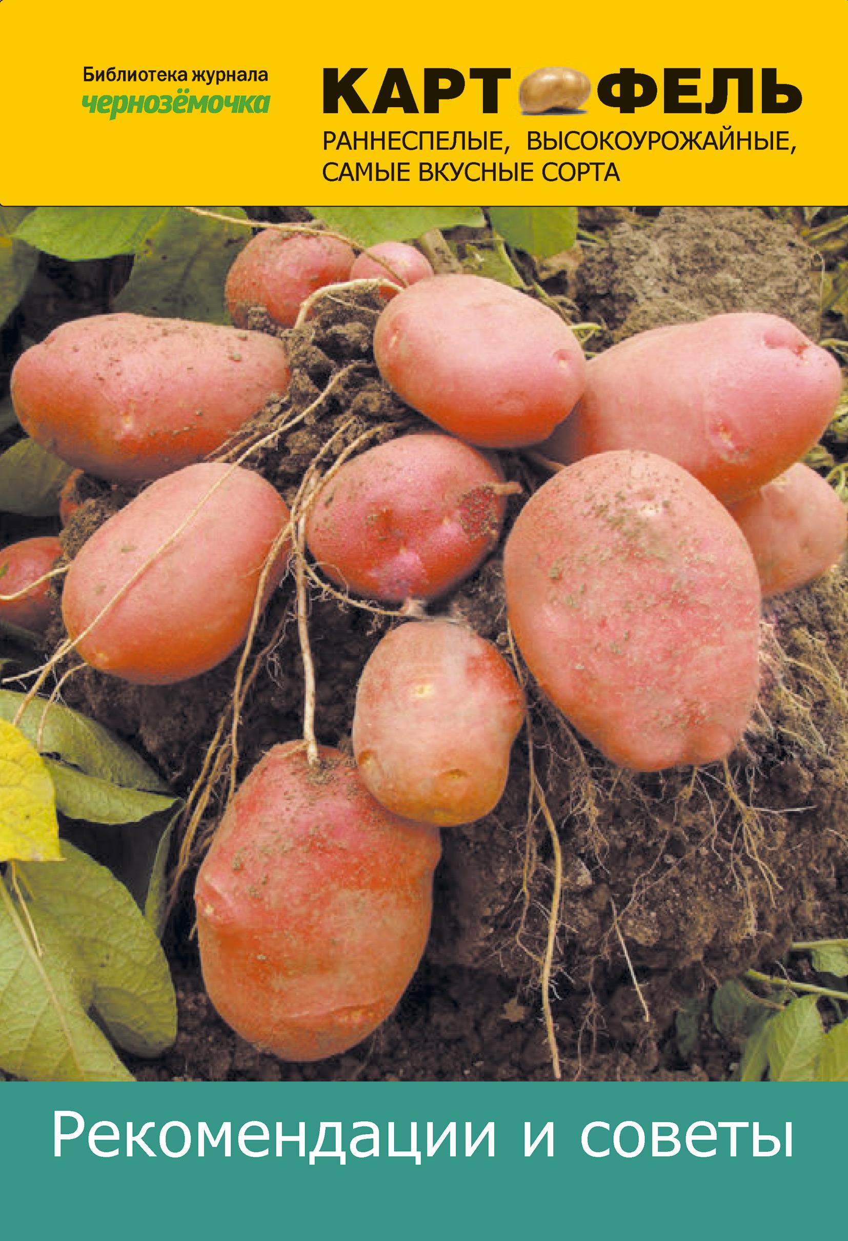 Картофель. Рекомендации и советы