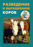 Разведение и выращивание коров