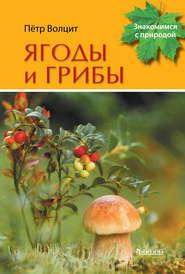Ягоды и грибы