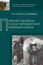 Павианы гамадрилы в лесах Черноморского побережья Кавказа